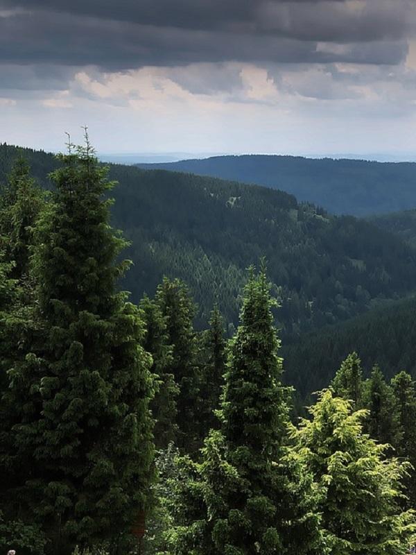 El primer mapa de bosques salvajes en Europa levanta sorpresa a propios y extraños