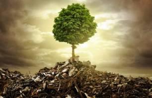 ¿Qué pasa con la contaminación del suelo?