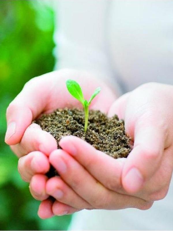 Conacyt y Semarnat lanzan convocatoria de investigación ambiental