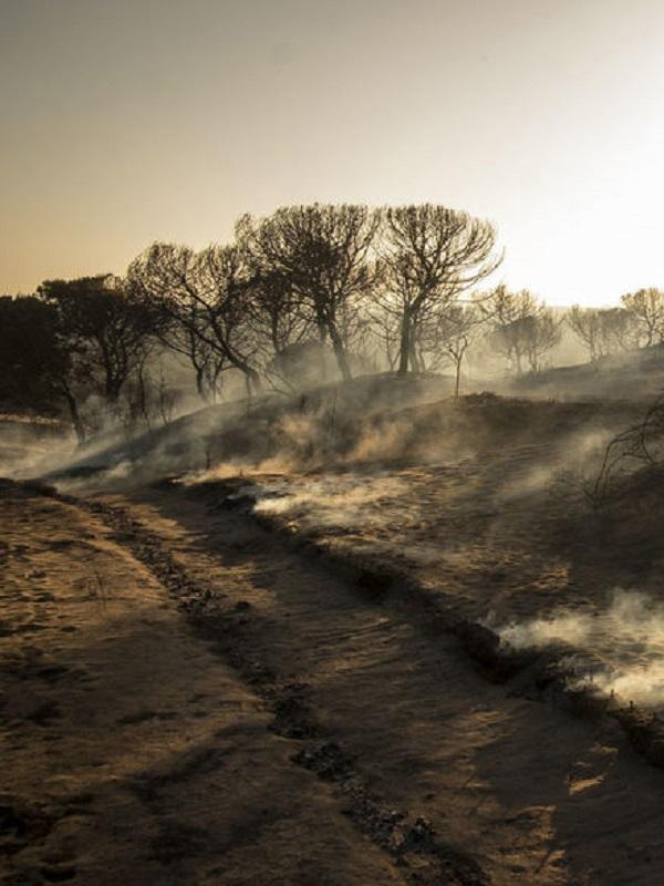 Los ecologistas dan luz verde a la restauración de la zona del incendio de Doñana