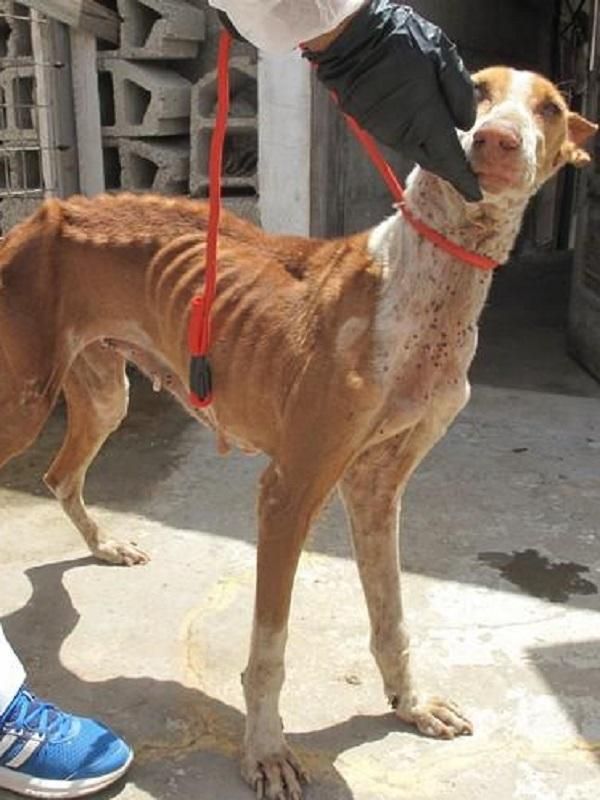 Detenido en Gran Canaria por tener siete perros en estado de abandono