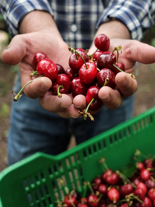 Cooperativa Frutos del Campo SCL, alimentos ecológicos