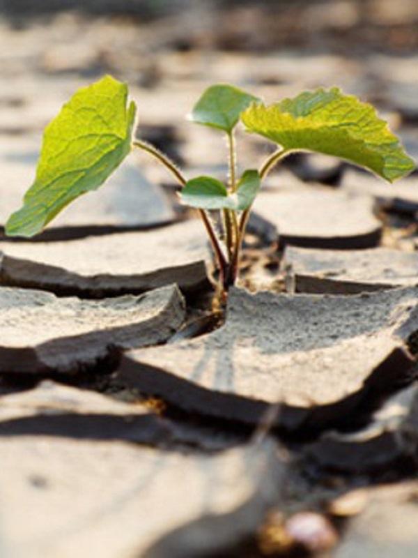El Plan B para adaptar los cultivos de Europa al cambio climático