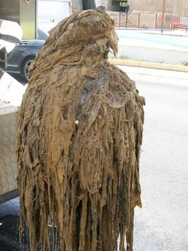 Emasa retira este año de depuradoras y estaciones de bombeo 2.268 toneladas de residuos, en su mayoría toallitas