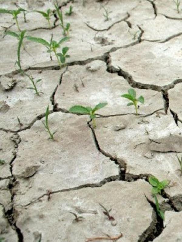 Las personas con menos recursos contribuyen en mayor medida a las acciones contra el cambio climático