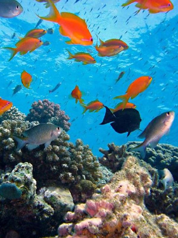 Los corales resisten el cambio climático un aminoácido esencial
