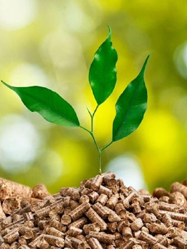 Enagás y Ence firman un acuerdo para el desarrollo de gas renovable a partir de biomasa
