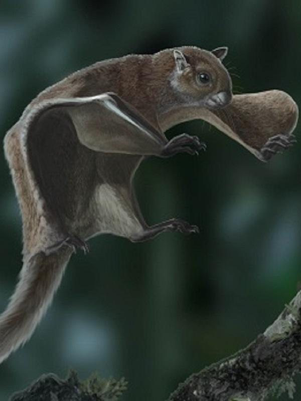 Un equipo de investigación internacional describe el fósil más antiguo de ardilla voladora