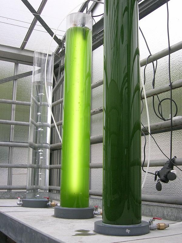 CENER y las microalgas, una solución a los retos de futuro del planeta