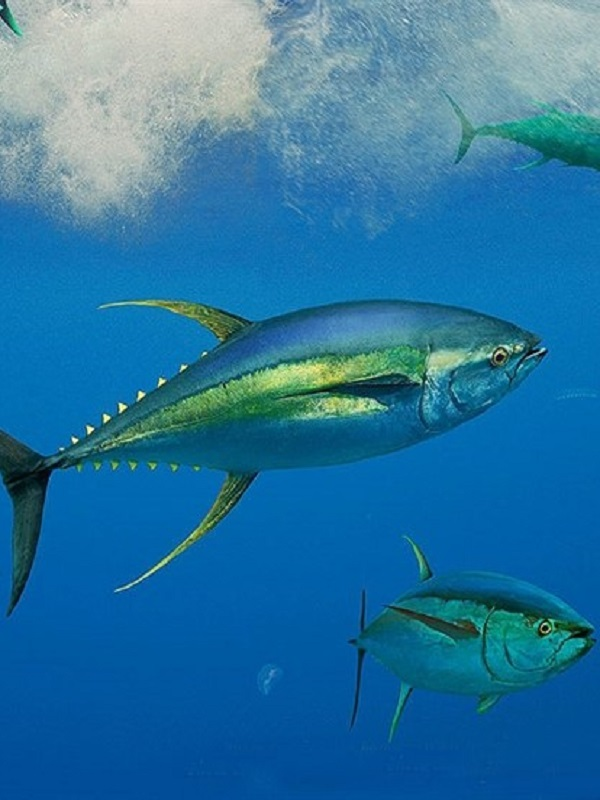 La vida marina en las áreas protegidas de toda Europa están en alerta roja