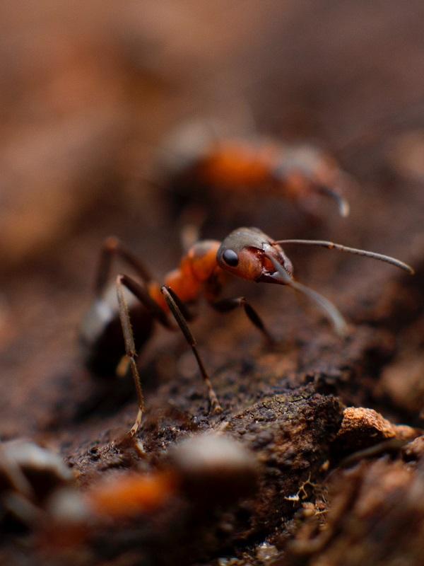 Las plantas son más listas que las hormigas