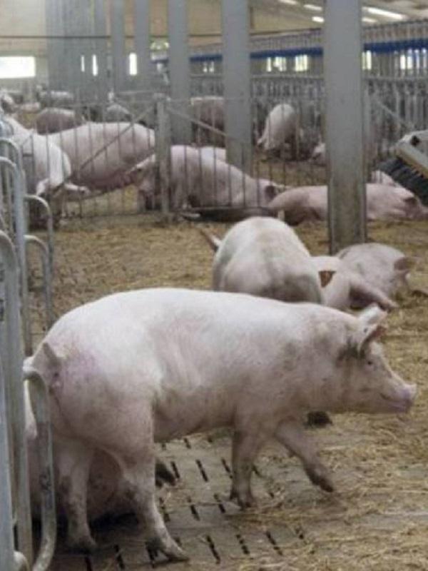 Reivindicando la ganadería familiar frente a la proliferación de las macrogranjas