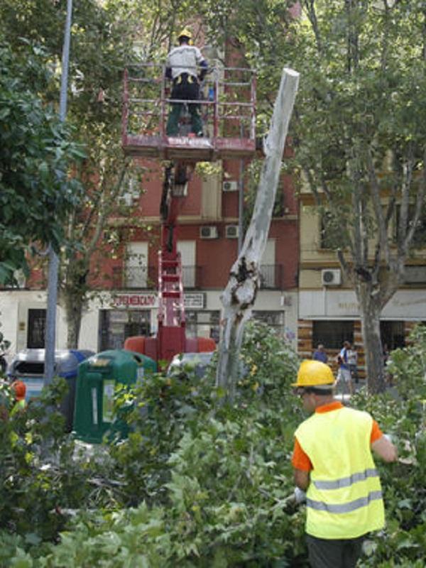 IU considera que la nueva plantación de árboles no palía el