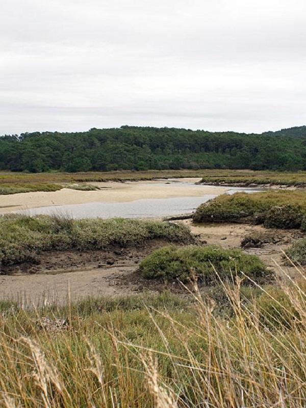 Galicia. Alegaciones de Verdegaia al PRUX del Parque Natural de Corrubedo