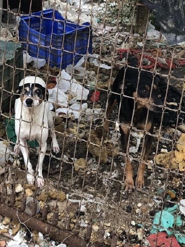 Diez detenidos por maltratar a 16 perros en fincas y viviendas de Vélez-Málaga