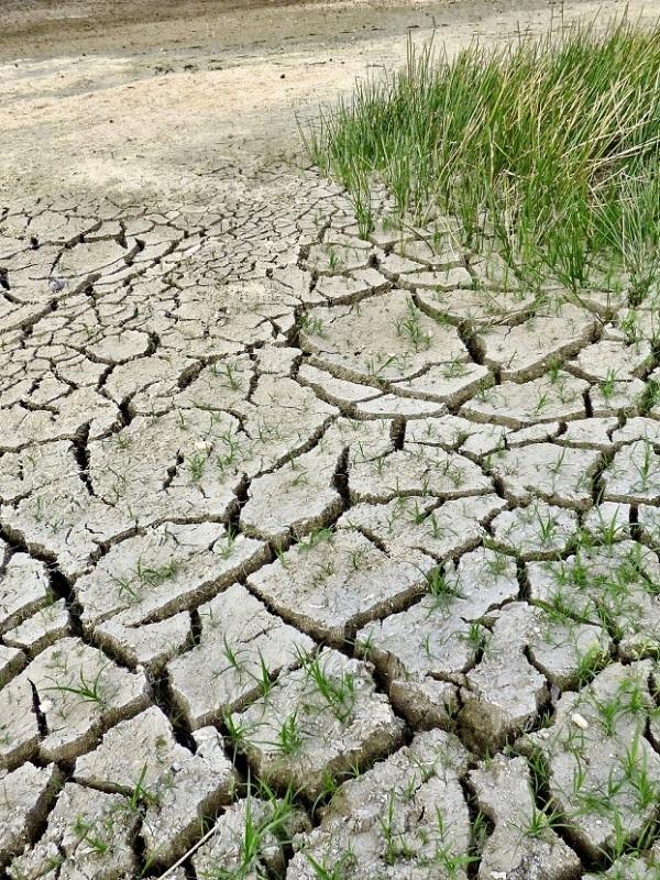 Euskadi edita una guía práctica de cómo hacer frente al cambio climático