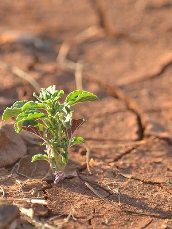 El concejal de medio ambiente de Logroño ningunea el cambio climático