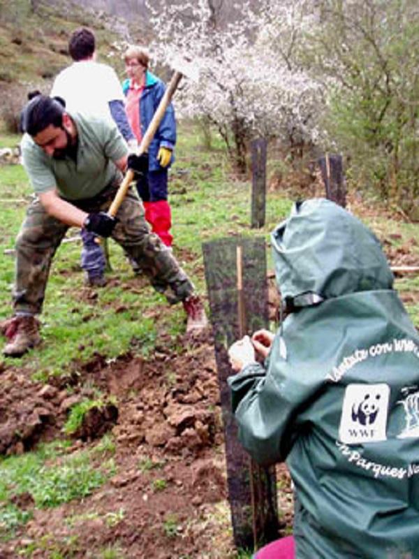 Voluntarios de WWF plantan 2.000 árboles en 14 puntos de España en defensa de los bosques