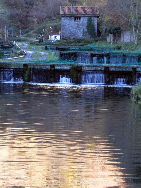 Asturias. Polémica a cuenta de la Piscifactoría de Abres