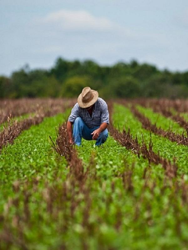 Proyecto: Hacia una agricultura más sostenible desarrollado por ANSE