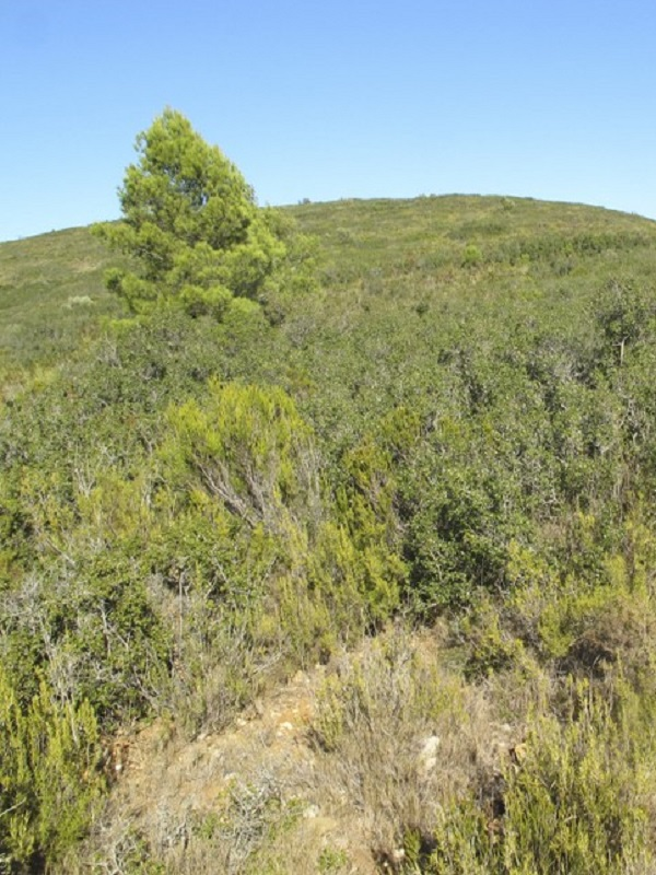 El Consell declara como Zona Especial de Conservación el Lugar de Importancia Comunitaria Serra d'en Galceran