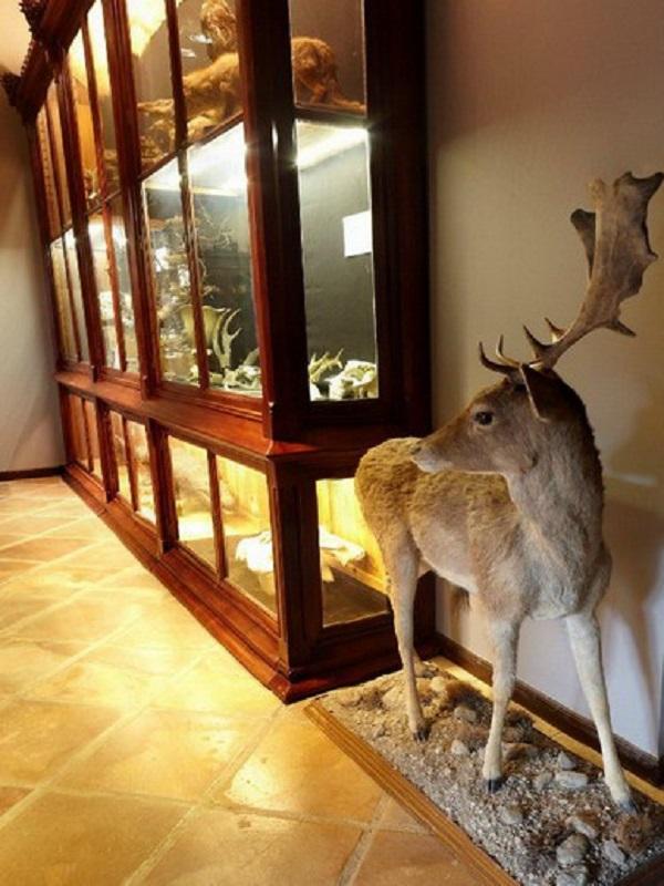 Cultura reabre el Museo de la Naturaleza de Cantabria tras su remodelación