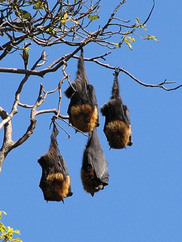Aumenta la presencia de murciélagos en el parque fluvial de la Comarca de Pamplona