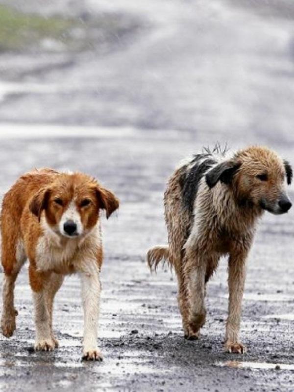 PP vasco pide que se prohíba por ley el sacrificio de animales abandonados