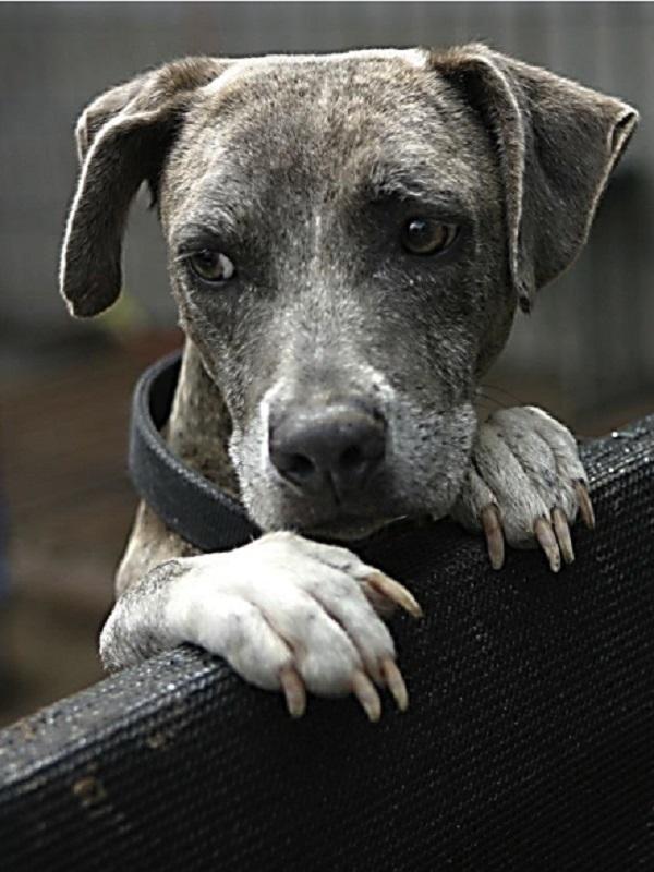 El perro tratado con insecticida reduce la transmisión de leishmaniasis a humanos