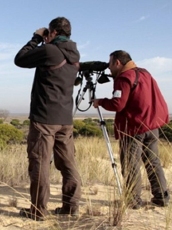 Doñana celebra el Día Mundial de las Aves con una recogida de perdigones de plomo en el Cerro de los Ánsares