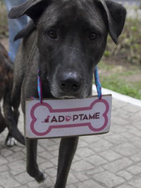 Valladolid celebrará este domingo el Día de la Mascota para promover la protección y la adopción de animales