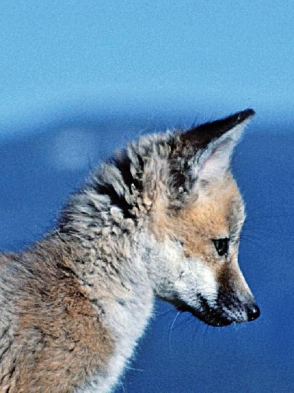 XIII edición de los Premios a la Conservación de la Biodiversidad