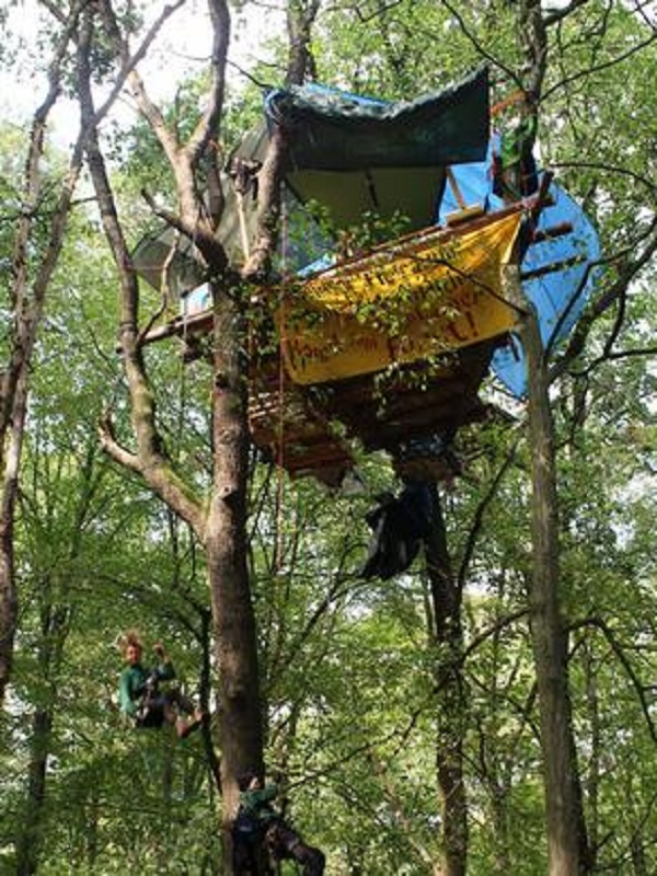 Miles de personas celebran el freno de la tala de un emblemático bosque en Alemania