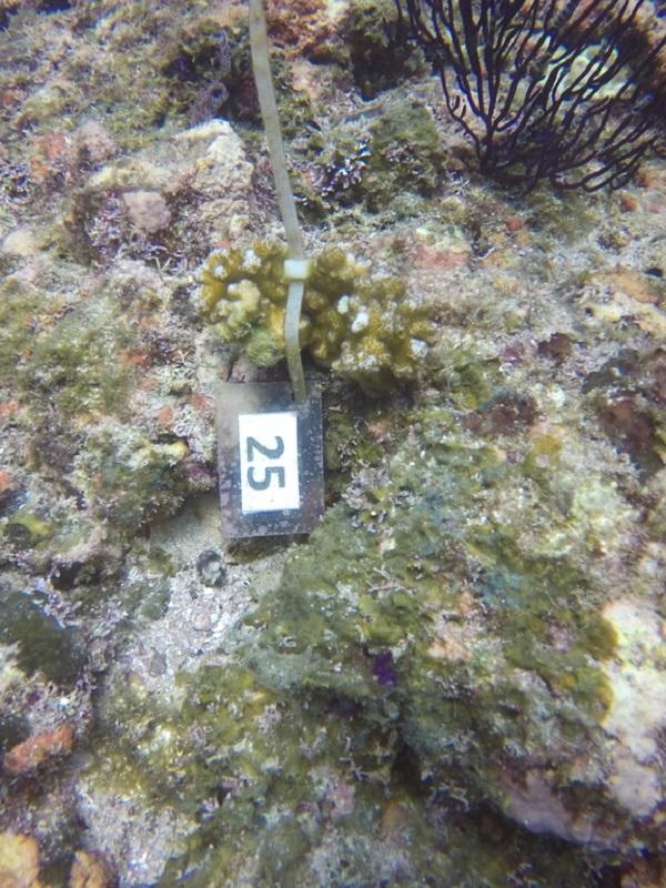 Conservación de los arrecifes de Occidente