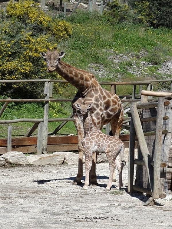 Dinero público para el zoológico Oasis Park