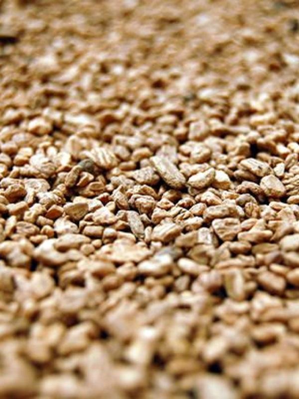 Ascienden a casi 51 millones de euros anuales la venta del hueso de aceituna como biocombustible