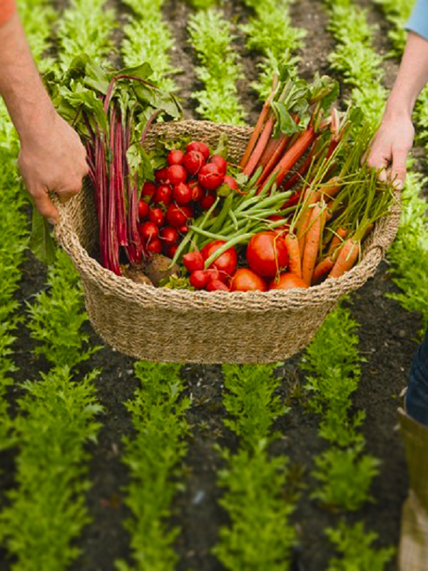 Murcia. Fecoam apuesta por una agricultura más ecológica para mejorar el entorno
