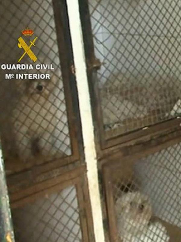 Liberan docenas de galgos en pésimas condiciones de una perrera ilegal de Villamanta