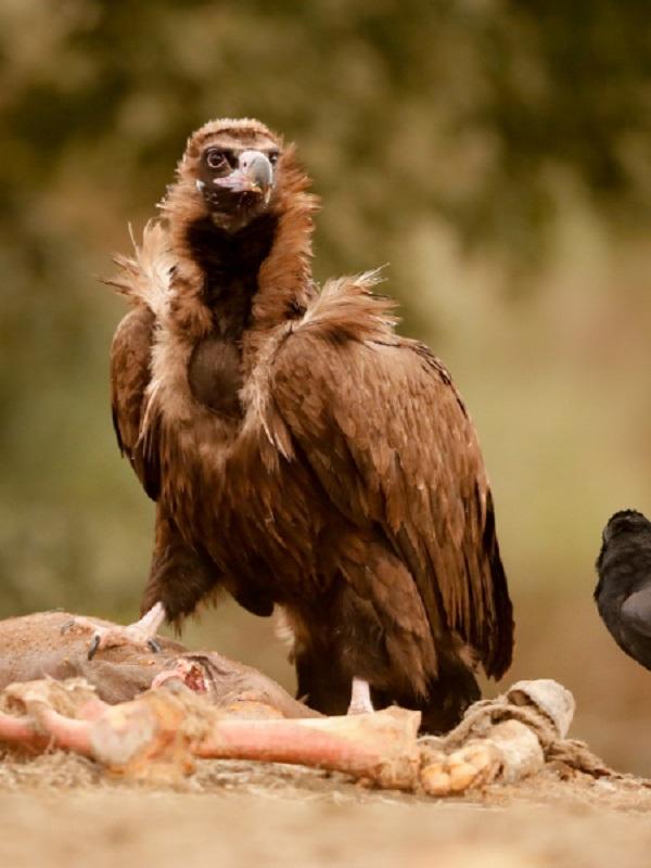 Fundación Naturaleza y Hombre, premio Fundación BBVA por la conservación del Oeste Ibérico
