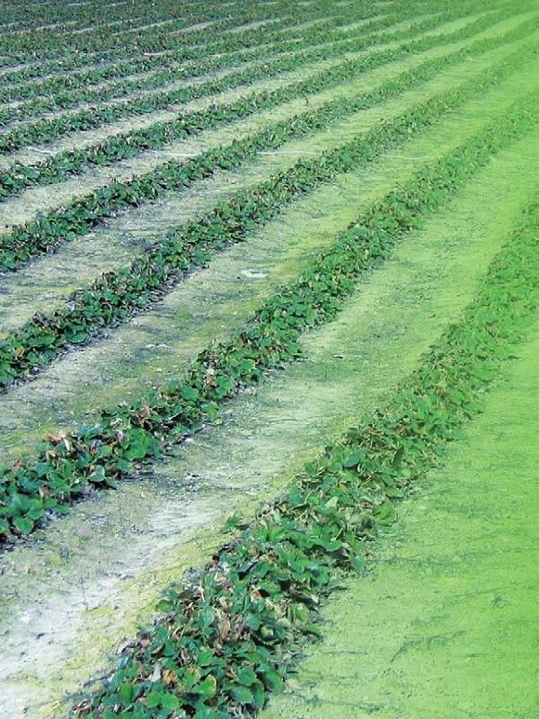Econatur, fabricación y desarrollo de productos fertilizantes, bioestimulantes y fitosanitarios para la agricultura sostenible