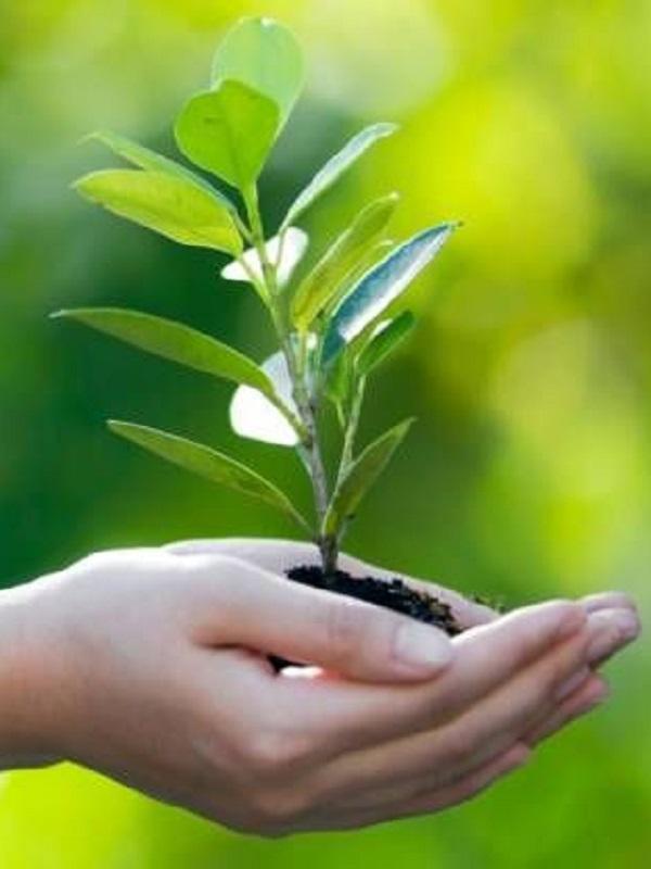España debe elaborar un plan contra los efectos medioambientales en la salud