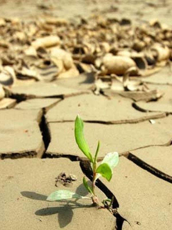 San Sebastián acogerá en marzo la Conferencia Internacional sobre Cambio Climático 'Change the Change'