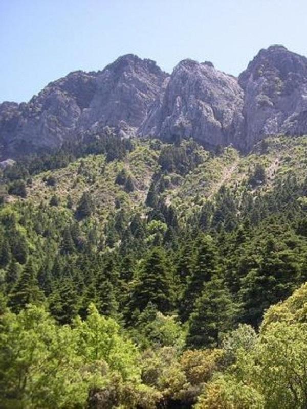 La Junta Rectora del Parque Natural Sierra de Grazalema se reúne tras 2 años de paralización