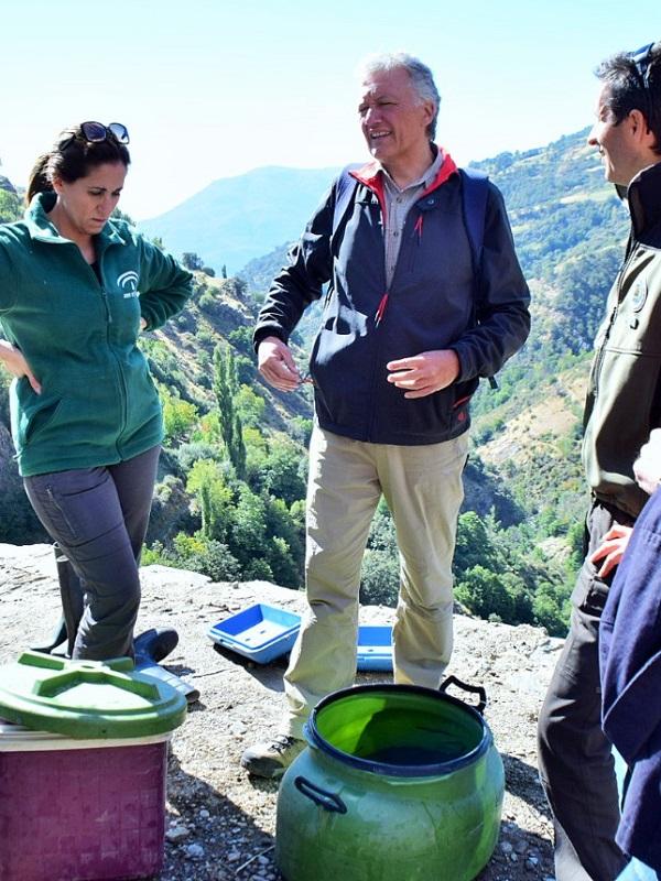 Liberados 2.000 alevines de trucha común en el río Poqueira, en la Alpujarra granadina