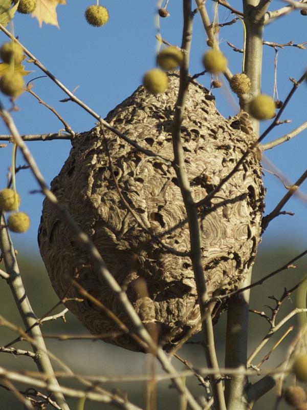 La abeja gigante de la resina llega a Catalunya