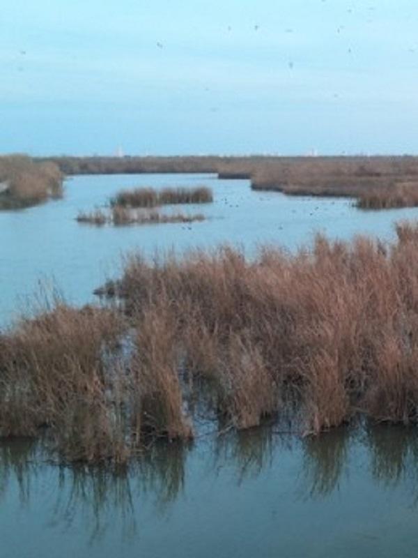 La Fundación Global Nature, premio internacional Ramsar a la Conservación de humedales