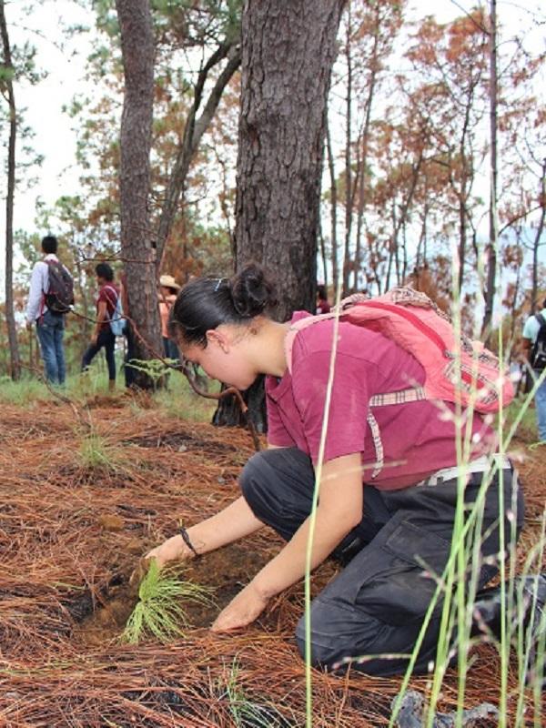 Comienza un programa en colegios extremeños con el que los alumnos sembraron 12.000 plantones el curso pasado