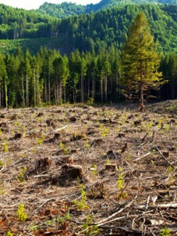 Los activistas creen que una victoria de Bolsonaro fomentaría la deforestación del Amazonas