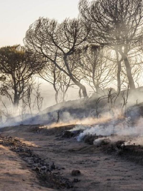 El Consejo de Participación de Doñana informa sobre el plan de restauración del incendio de 2017