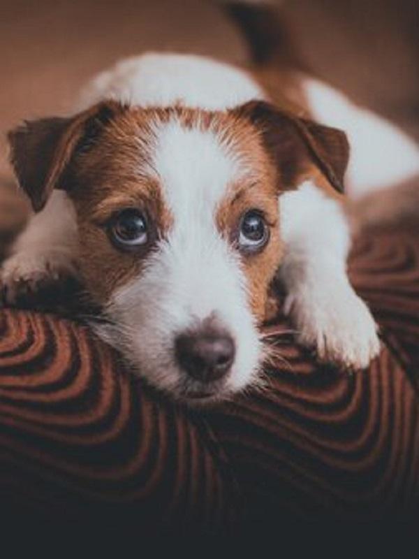 Conductas antisociales y depresivas: así sufren las mascotas la pérdida de sus dueños